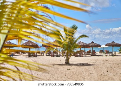 Palm trees and chairs in resort beach on Bahia, Brazil