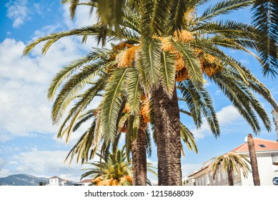 palm trees in city