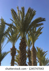 Palm trees and clear skies