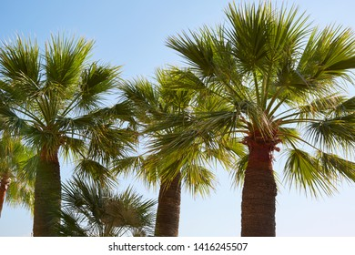 Palm trees and clear sky in a sunny summer day