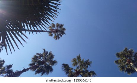 Palm trees and a cloudless sky