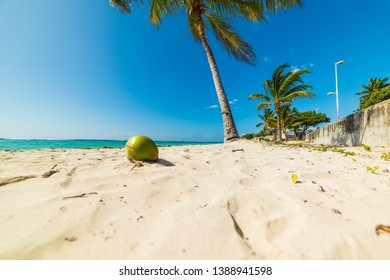 Palm trees and coconut in Raisins Clairs beach in Guadeloupe, French west indies. Lesser Antilles, Caribbean sea