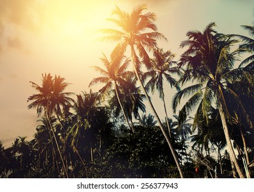 Palm Trees And Colorful Sunset
