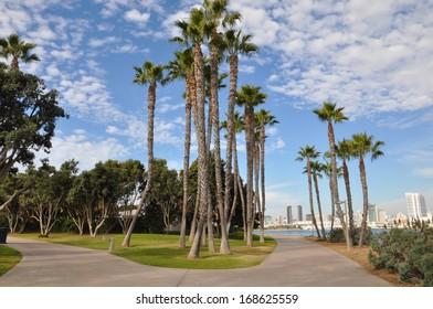 Palm Trees at Coronado Island in San Diego, California
