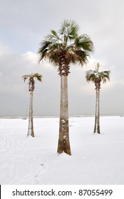 palm trees covered by snow in december