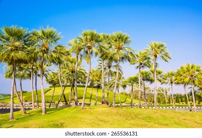 Palm trees decorate in garden