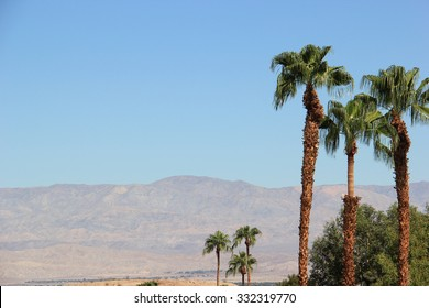 Palm Trees with Desert Mountain in background