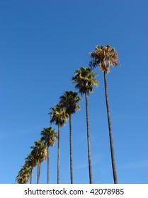 palm trees diagonally rising into the sky