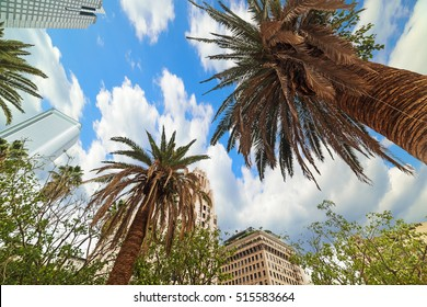 Palm trees in Downtown Los Angeles