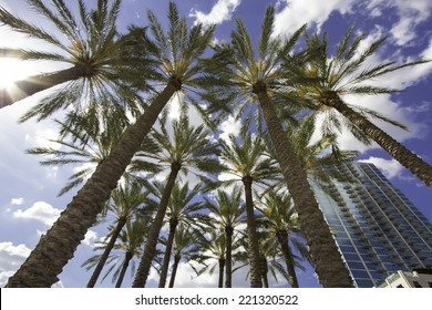 Palm Trees downtown Tampa, FL