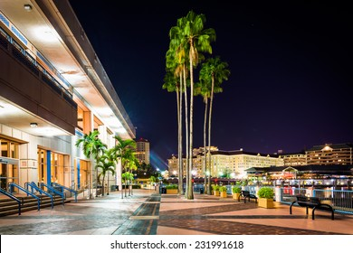 Palm trees and the exterior of the Convention Center at night in Tampa, Florida.
