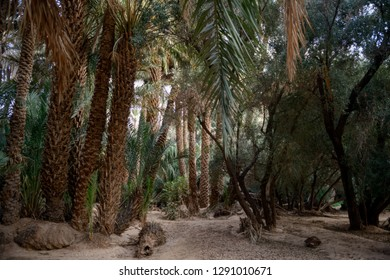 Palm trees in a fertile oasis in Ouarzazate, Morocco