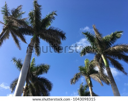 Palm Trees Florida Stock Photo Edit Now 1043098315 Shutterstock