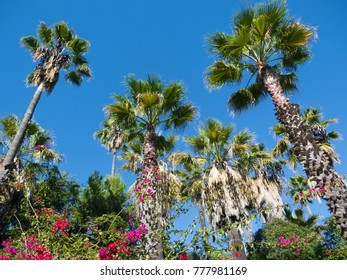 Palm trees and flowers in a botanical garden