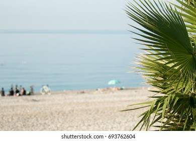 Palm trees in focus, blurred beach background