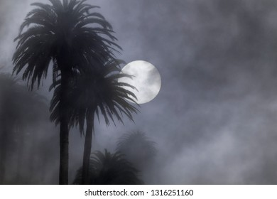 Palm trees in a foggy full moon night