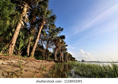 Palm trees following river