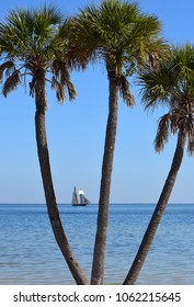 Palm trees framing ocean with 19th century sailing ship on horizon