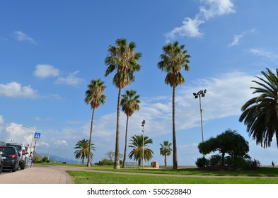 Palm trees in France