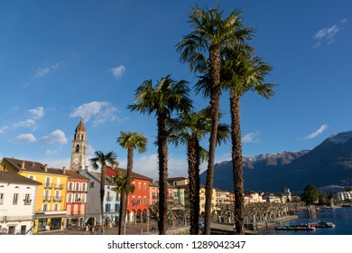 Palm trees in front of Ascona, Switzerland