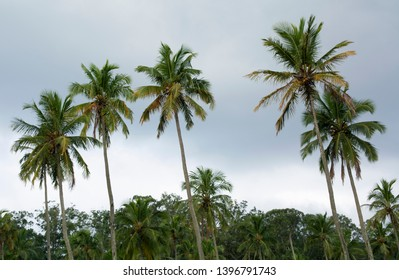 Palm trees in front of cloudy skies at Ilhabela island, Brazil