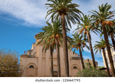 Palm trees in front of Eglise de la Misericorde in the center of L'Île-Rousse, Corsica, France