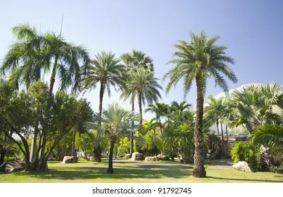 Palm trees, garden