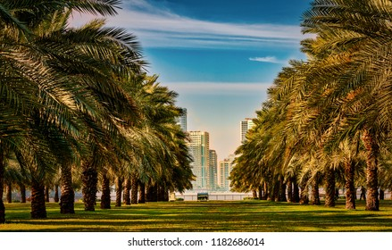 Palm Trees Garden in Sharjah, UAE. Which is located on Sharjah Corniche. High-rise buildings overlook the sea and the palm garden.