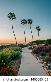 Palm trees and gardens at sunset in La Jolla Shores, San Diego, California