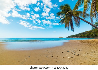 Palm trees and golden sand in La Perle beach in Guadeloupe, French west indies. Lesser Antilles, Caribbean sea