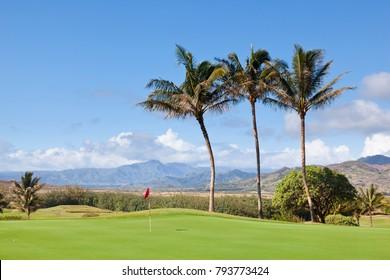 Palm trees at a golf course in Kauai, Hawaii.