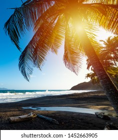 Palm trees in Grande Anse beach at sunset in Guadeloupe, French west indies. Lesser Antilles, Caribbean sea