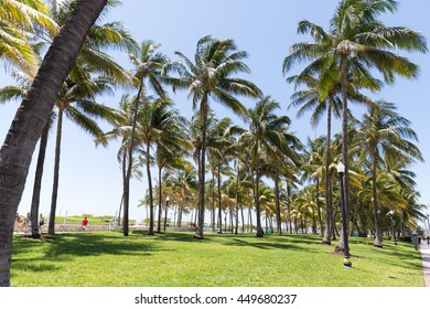 Palm trees and grass
