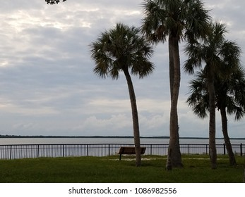 Palm trees with green grass along the shoreline with a park bench and gray dark gloomy cloudy sky at sunset