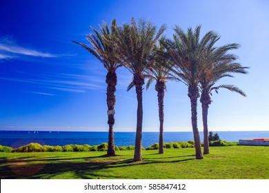 Palm trees and green grass, blue sea, Spain
