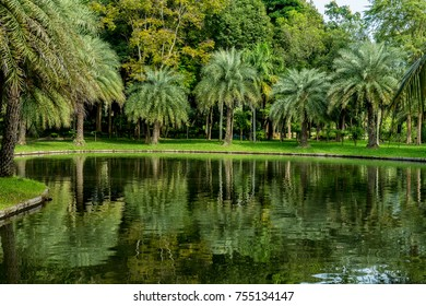 Palm trees with green lake and white cloud background