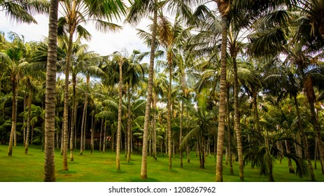 palm trees green nature background