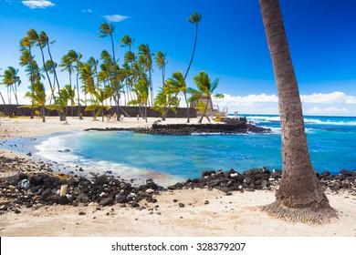 Palm trees growing on ancient Hawaiian site Pu'uhonua O Honaunau National Historical Park on Big Island, Hawaii