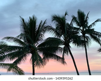 Palm trees in Haleiwa, Hawaii at sunset