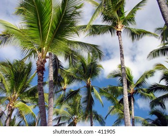 Palm trees in Hawaii.