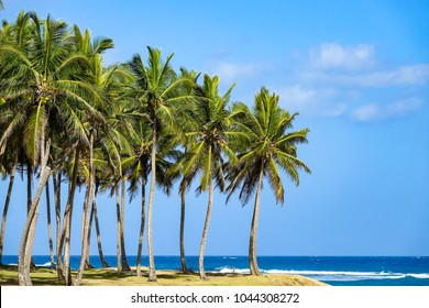 Palm trees in the Hideaway Beach