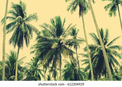 Palm Trees Jungle Nature Landscape Tropical Background Holiday Travel View Toned Effect