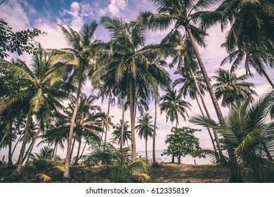 Palm Trees Jungle Nature Landscape Tropical Background Toned Effect