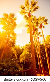Palm trees in jungle on beautiful sunset