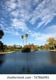 palm trees at La Mirada park california