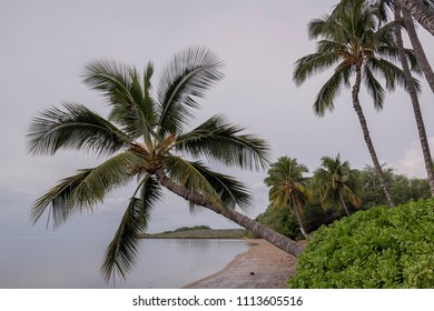 Palm trees leaning over a deserted beach in Molokai, Hawaii