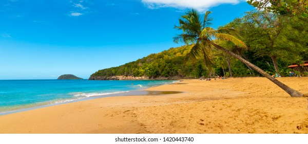 Palm trees leaning over La Perle beach in Guadeloupe, French west indies. Lesser Antilles, Caribbean sea