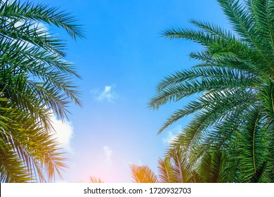 Palm trees leaves On a bright sky background. Vintage style concept