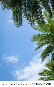 Palm trees and palm leaves seen from below on background of blue sky with white clouds. Natural background with Space for text.