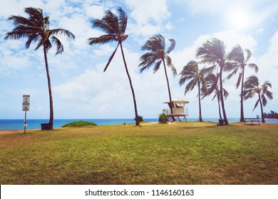 Palm trees and lifeguard tower on tropical beach in Haleiwa, North shore of Oahu, Hawaii